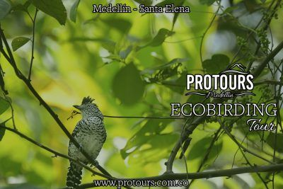 Eco-Birding Santa Elena