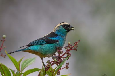 Eco-Birding Jardín